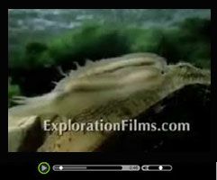Origin of Species Video