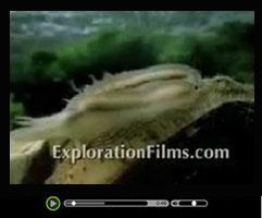 De oorsprong der soorten video